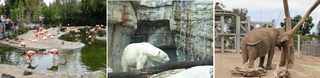 San Diego zoo geral1